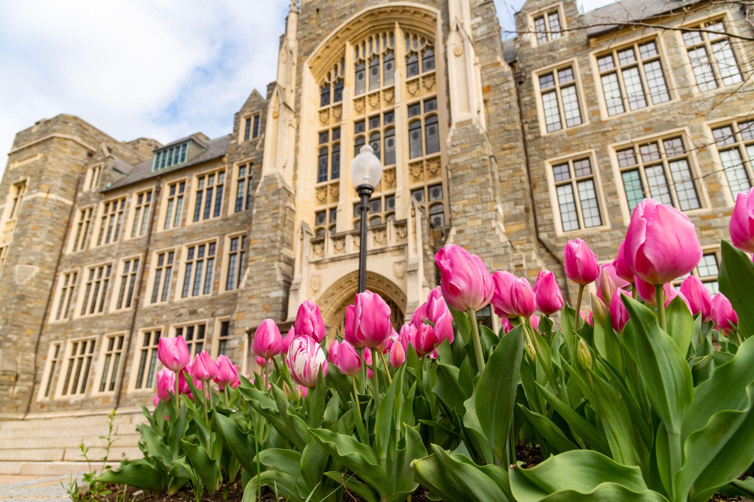 Campus, Flower, Spring, Tulip, White-Gravenor Hall